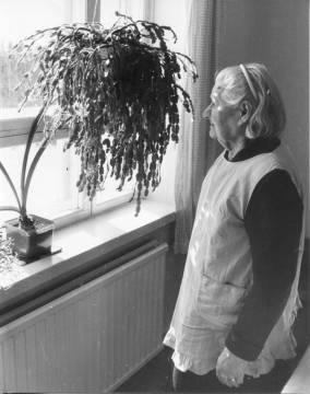 Aune Ylimys oli nuoruudessaan Tarjanteilla piikana ja näki usein Inhan kulkevan kuvausretkillään. Aune Ylimys asunnossaan Äijännevan koululla kevättalvella 1990. Kuva: Maija Myllykangas.